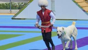 Çoban köpeği ırkının altın heykelini dikmek yetmedi! Onuruna bir de ulusal bayram ilan ettiler