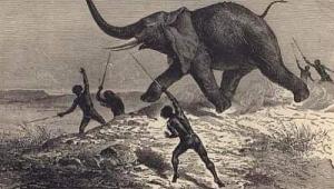 Fil ile avcılarının hikayesi: