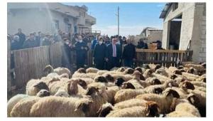 Gözaltına alınan koyunlar ne olacak?