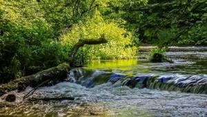 Hayat Çizgimiz: Orman ve Su