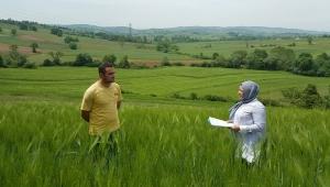 Kocaeli'nde yarısı hibe yerli tohumlar 30 bin dekar araziye ekilecek