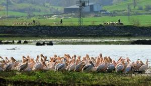 Malatya'da hayvancılık sektörü gelişiyor