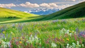 Doğada kır çiçeklerine ve habitatlarına saygı gösterin...