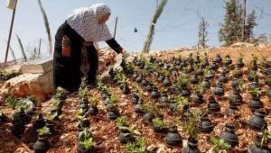 Filistinli bir annenin İsrail askerlerince atılan bomba kapsüllerine ektiği çiçekler...