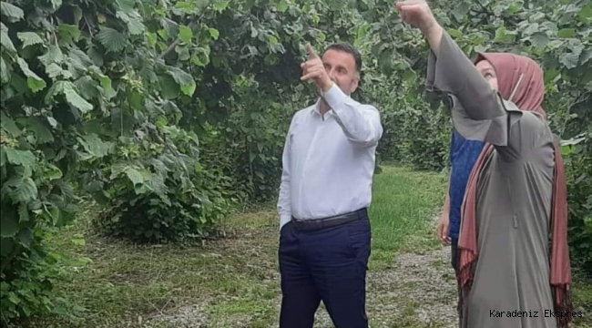 FINDIK REKOLTESİ HESABINDA