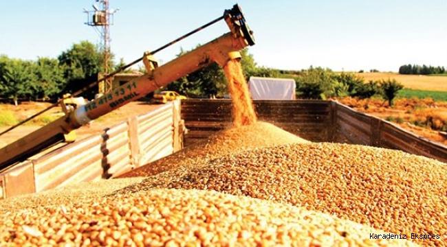 Gıdada Rusya'ya göbekten bağlandık! Buğday gelmezse işimiz yaş!