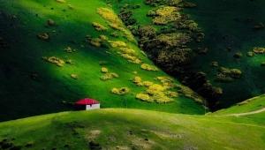 Görkemi, rengi ile hayran bırakan Orman gülleri