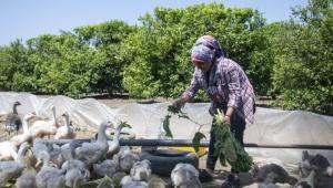 Mersin'de 'Kazanç Projesi' Kırsalda Gelir Kapısı Oldu