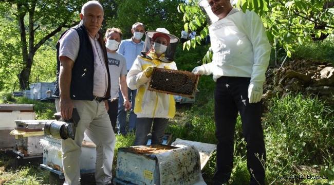 Ordu Gürgentepe'li Genç Çiftçimiz 40 Kovan Arısını 100 Kovana Çıkarttı
