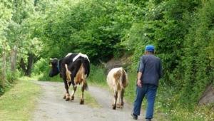 İrfan Donat : Hayvancılık sektörü keskin viraja girdi