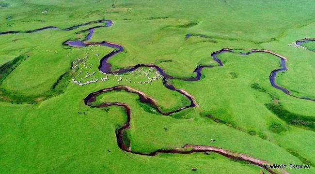 Karadeniz'in menderesleriyle ünlü Perşembe Yaylası doğaseverleri ağırlıyor