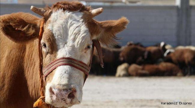 Şarbon için hayvan sahiplerine tazminat ödenecek
