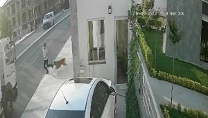 Sokak köpeklerinin saldırılarına ne demeli?
