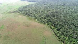 TBMM'de konuşan TEMA Başkanı Ataç: Ormanları parçalıyoruz