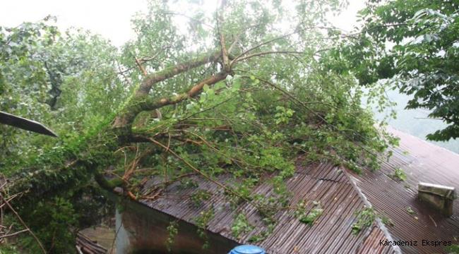 Giresun'da şiddetli yağış sebebiyle bir eve ağaç devrildi