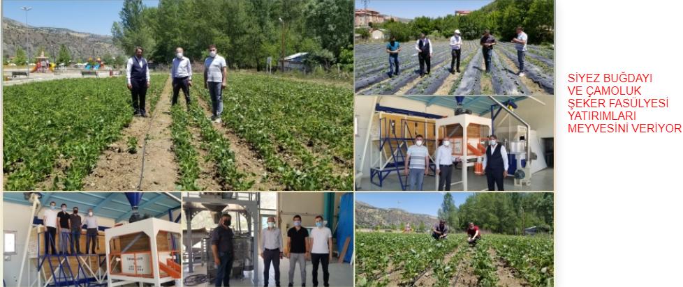 Giresun'da Siyez Buğdayı ve Çamoluk Şeker Kuru Fasulyesi 'ne Yapılan Yatırımlar Meyvelerini Veriyor…