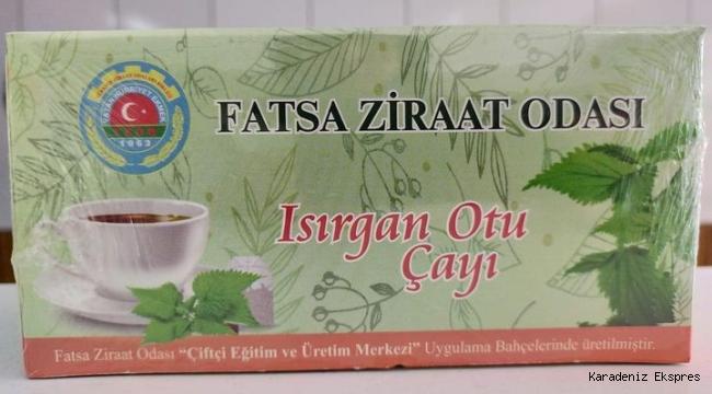 Isırgan Otu Çayı Fatsa'da Üretiliyor