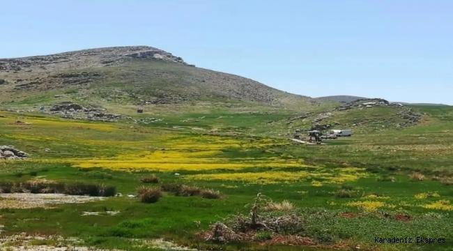 Sarıçiçek Yaylası'ndaki maden sondajına Danıştay engeli