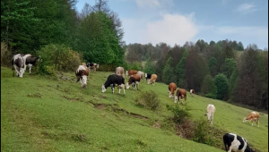 Selçuk Şirin: Bir çiftçi toprağını neden terk eder?