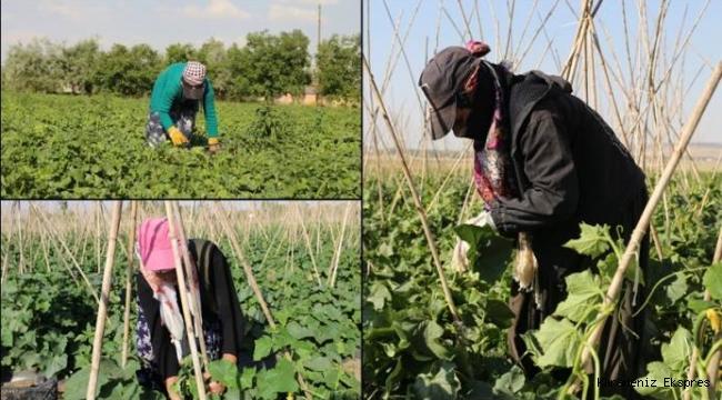Sömürü, 'kumalık', yoksullukla mücadele eden kadınlar...