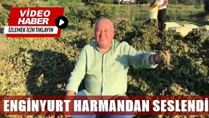 DP Ordu Milletvekili Cemal Enginyurt, fındık harmanından seslendi: Fındık 35 Tl olmalı...
