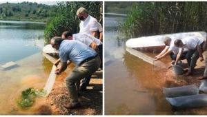 Fatsa Gaga Gölü'ne 100 bin Sazan Balığı yavrusu bırakıldı…