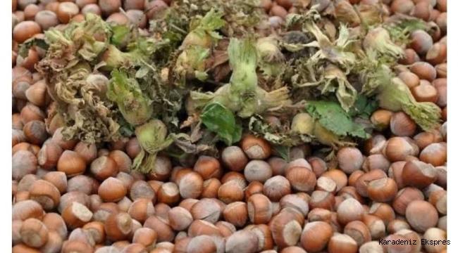 Fındık bitkisinin özellikleri