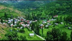 Türkiye'de 68 vilayette bir Yevelili ile karşılaşmanız mümkün!