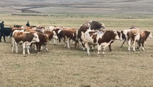 Tarım ve hayvancılıkla ilgili 9 projeye 10 milyon lira hibe verilecek