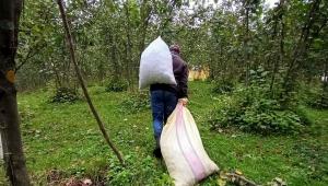 TMO duyurdu: Fındık üreticilerine ödemeler başlıyor!