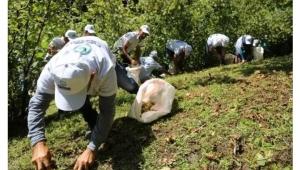 Poyraz: Ordu ve Giresun'da fındığı kaldırın heyelan olur, fındık bahçeleri derelere uçar