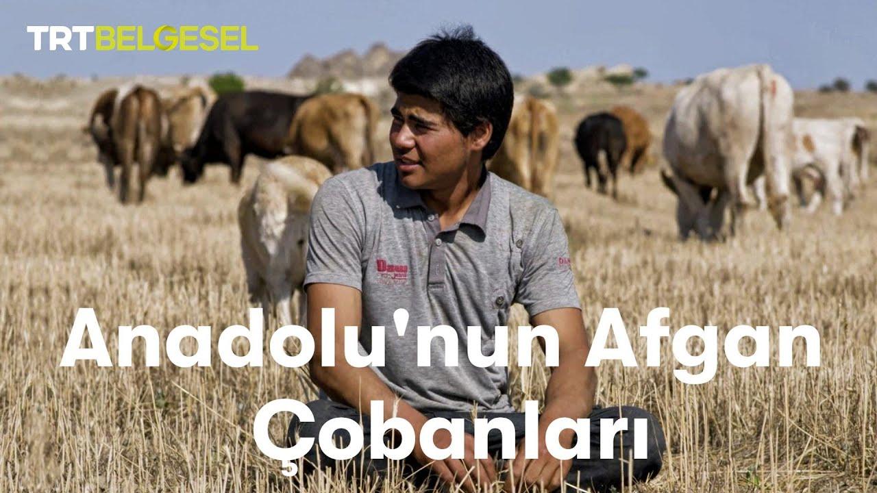 Anadolu'nun Afgan Çobanları