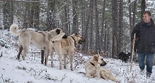 Hayvancılık yapmak için köylerine dönen kardeşler - Belgesel